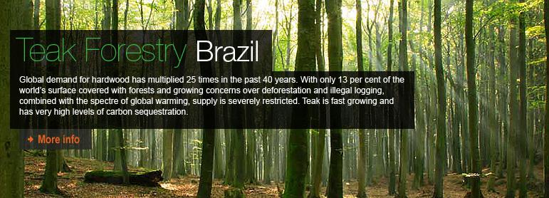 Teak Forestry, Brazil