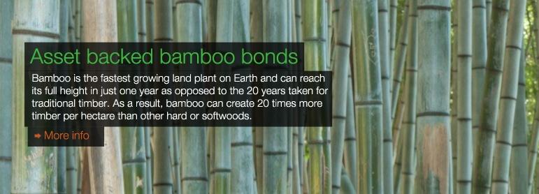 Asset backed Bamboo bond