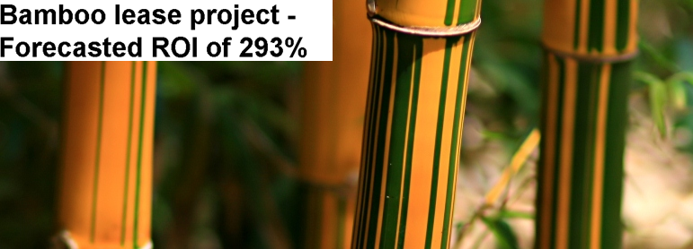 Bamboo Forestry Investment