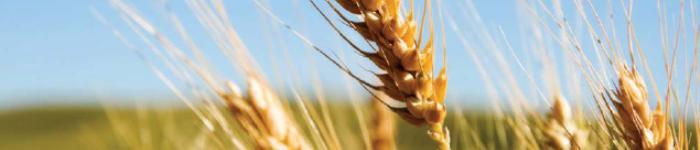 Crimea: grain sales increased by 7.6%
