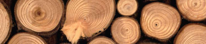 Teak forestry investment shows money really can grow on trees